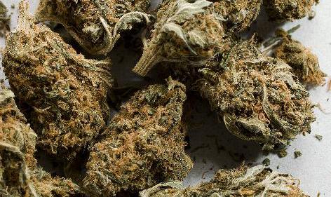 marijuana buds cropd