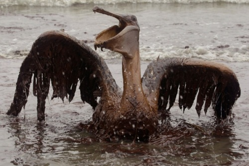 Today marks nine months since the BP Deepwater Horizon offshore oil rig ...